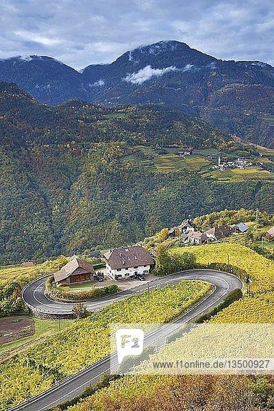 Serpentine mit Weinbergen im Herbst am Ritten  Bozen  Südtirol  Italien  Europa