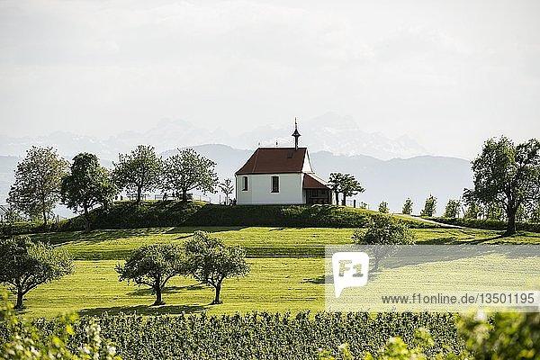 Blühende Apfelplantage  Antoniuskapelle  Selmnau  bei Wasserburg  Bodensee  Schwaben  Bayern  Deutschland  Europa