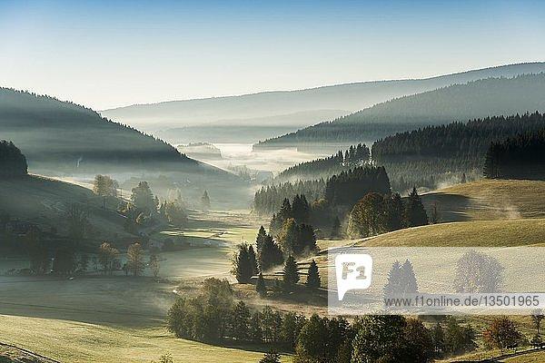 Morgennebel im Herbst  Jostal  Schwarzwald  Baden-Württemberg  Deutschland  Europa