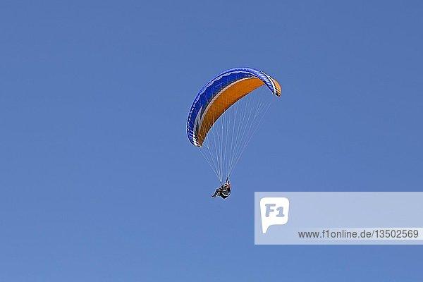 Paraglider am Hochgrat bei Steibis  Allgäu  Bayern  Deutschland  Europa