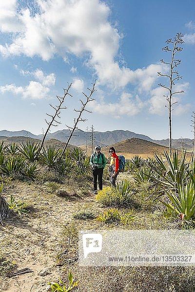 Wanderer zwischen bewachsenen Dünen mit Agaven  Playa de Los Genoveses  Nationalpark Cabo de Gata-Nijar  Almería  Spanien  Europa