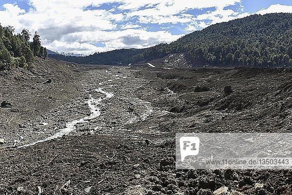 Zerstörter Wald durch einen Erdrutsch in Villa Santa Lucía  bei Chaiten  Rio Burritos  Carretera Austral  Patagonien  Chile  Südamerika