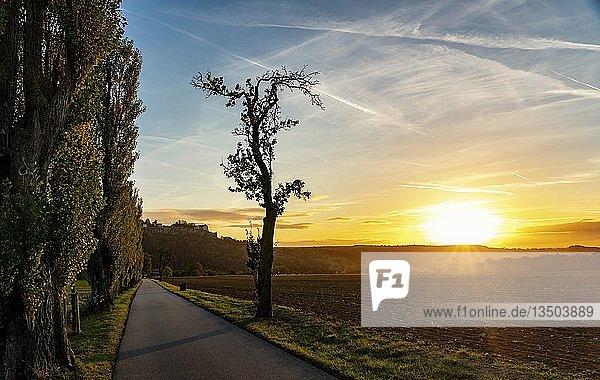 Pappeln (Populus)  Straße  Sonnenuntergang  Sächsische Schweiz  Deutschland  Europa