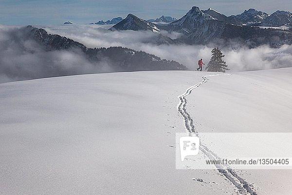 Skitour  Skispur in unberührtem Skigelände  Skitourengeherin im Aufstieg  dahinter Nebeldecke und die Tannheimer Berge  Wertacher Hörnle  Unterjoch  Landkreis Oberallgäu  Bayern  Deutschland  Europa