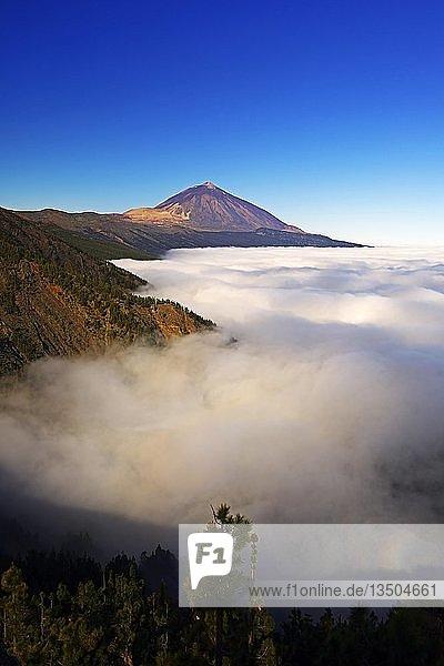 Pico del Teide bei Sonnenaufgang über Passatwolken  Teide-Nationalpark  Teneriffa  Kanarische Inseln  Spanien  Europa