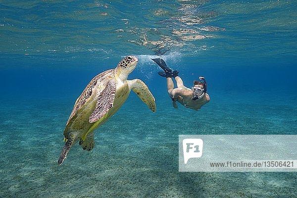 Frauen mit Maske und Flossen schnorchelt mit Suppenschildkröte (Chelonia mydas)  Rotes Meer  Abu Dabab  Marsa Alam  Ägypten  Afrika