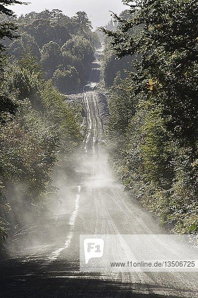 Wellblechpiste der Carretera Austral im gemäßigten Regenwald  Pumalín Park  bei Chaitén  Región de los Lagos  Chile  Südamerika