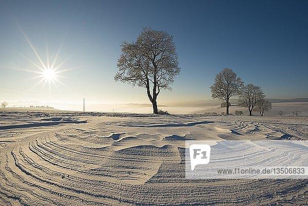 Bäume in Winterlandschaft mit Schneeverwehungen  Landkreis Konstanz  Baden-Württemberg  Deutschland  Europa
