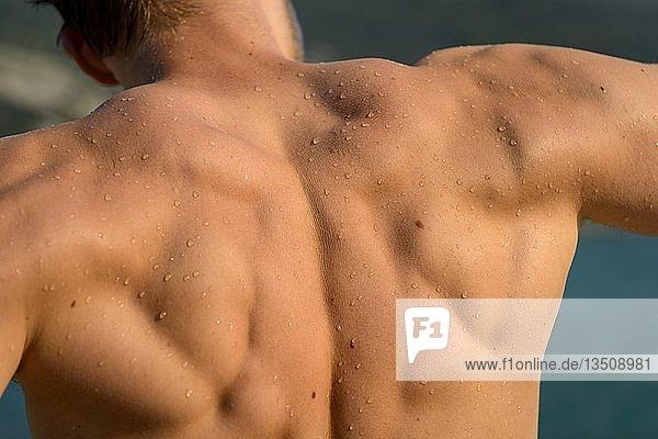 Rückenmuskulatur einen jungen muskulösen Mannes  Italien  Europa