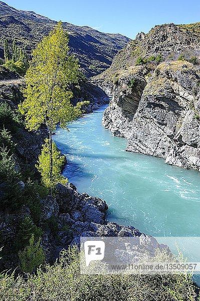 Türkises Wasser des Kawarau-Flusses in der Kawarau-Schlucht  Südinsel  Neuseeland  Ozeanien