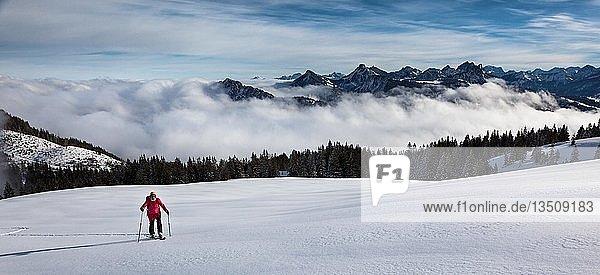 Skitour  Skitourengeherin im Aufstieg  in unberührtem Skigelände  dahinter Nebeldecke und die Tannheimer Berge  Wertacher Hörnle  Unterjoch  Landkreis Oberallgäu  Bayern  Deutschland  Europa