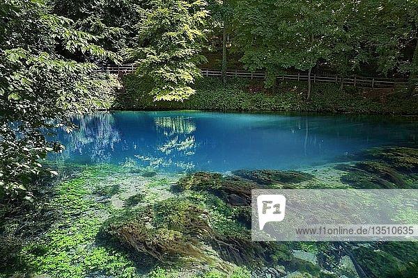 Blautopf  Karstquelle  Algen  Blaubeuren  Alb-Donau-Kreis  Schwäbische Alb  Baden Württemberg  Deutschland  Europa