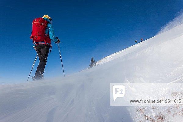 Skitour  Skitourengeherin im Aufstieg  Sturm an einer Wechte  Krinnenspitze  Tannheimer Berge  Österreich  Europa