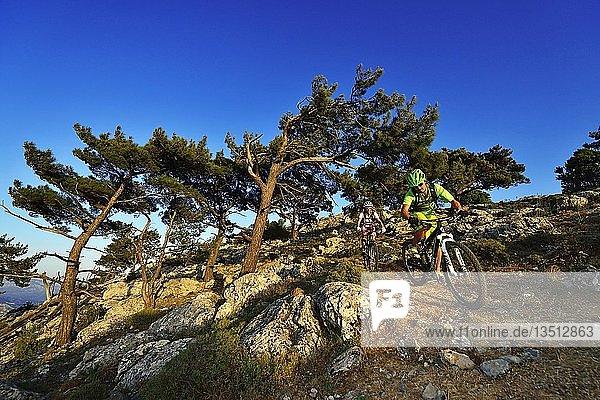 Zwei Mountainbiker auf felsigem  bergigem Weg durch Kiefern  bei Selakano  Mirtos  Kreta  Griechenland  Europa