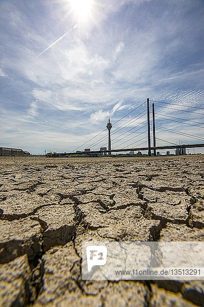 Rhein bei Düsseldorf  extremes Niedrigwasser  Rheinpegel bei 84 cm  nach der langen Trockenheit ist das linke Rheinufer  bei Düsseldorf Oberkassel trocken  Rheinturm  Rheinkniebrücke  Düsseldorf  Nordrhein-Westfalen  Deutschland  Europa