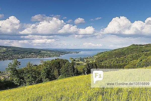 Blick über eine Sommerwiese bei Klingenzell hinab zum westlichen Bodensee  links die Halbinsel Höri  Kanton Thurgau  Schweiz  Europa