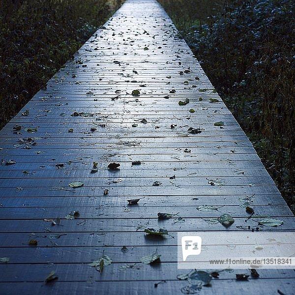 Fallen leaves on a wooden pontoon