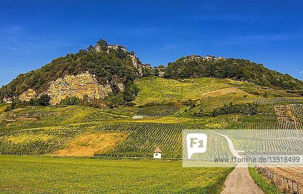 Vineyards of Chateau-Chalon village  Jura department  Bourgogne-Franche-Comté  France  Europe