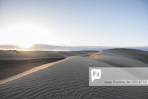 Sanddünen von Maspalomas  Gran Canaria  Kanarische Inseln  Spanien  Europa