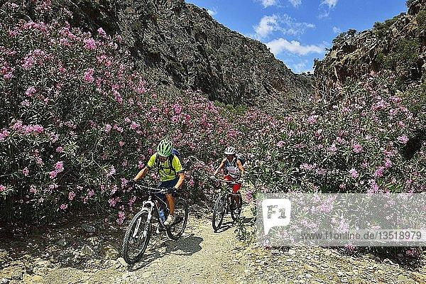 Zwei Mountainbiker radeln zwischen Oleanderbüschen im Gebirge  Weg nach Agio Farago  Kali Limenes  Matala  Kreta  Griechenland  Europa
