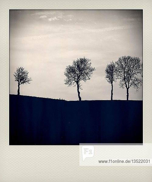 Polaroid effect of trees in countryside  France  Europe