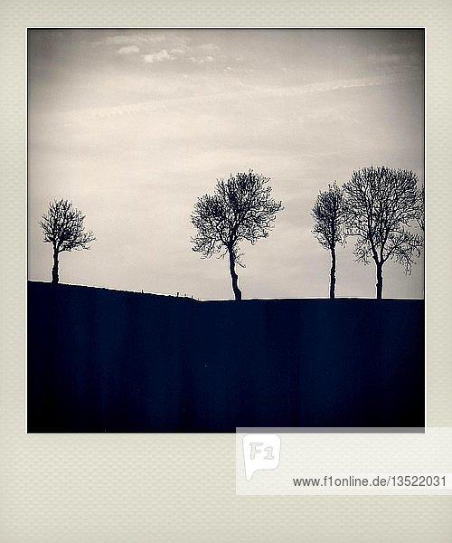 Polaroid  Bäume auf dem Land  Frankreich  Europa