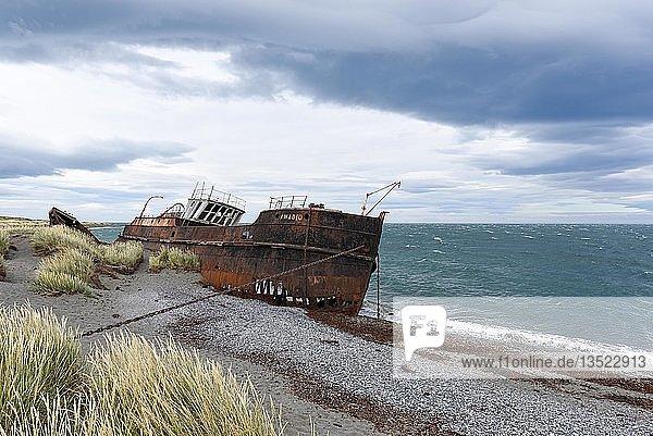 Shipwreck of the Amadeo  San Gregorio  near Punta Arenas  Magellan Strait  Patagonia  Chile  South America
