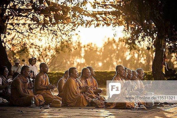 Buddhistische Pilger beten am Bodhi Baum am Mayadevi-Tempel  Geburtsort von Buddha  Lumbini  Nepal  Asien Buddhistische Pilger beten am Bodhi Baum am Mayadevi-Tempel, Geburtsort von Buddha, Lumbini, Nepal, Asien