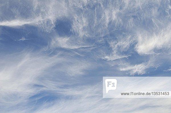 Cirruswolken  auch Federwolken  Schleierwolken  Eiswolken  auf einer Höhe von 8000 bis 12000 m