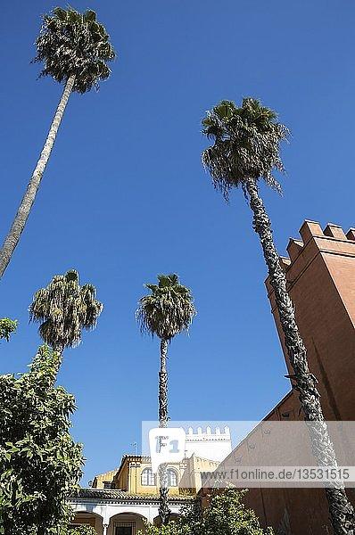 Der Alcubilla-Garten im Alcazar von Sevilla  Sevilla-Provinz  Andalusien  Spanien  Europa