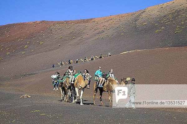 Touristen reiten auf Dromedaren (Camelus dromedarius) auf den Feuerbergen  Montanas del Fuego  Nationalpark Timanfaya  Lanzarote  Kanarische Inseln  Spanien  Europa