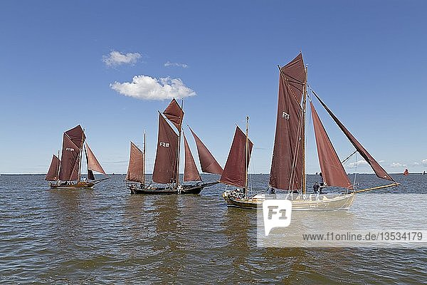 Zeesboote auf Saaler Bodden  Zeesbootregatta  Wustrow  Fischland  Mecklenburg-Vorpommern  Deutschland  Europa