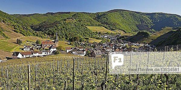 Blick über die Weinberge auf den Ort Mayschoss  Ahrtal  Eifel  Rheinland-Pfalz  Deutschland  Europa