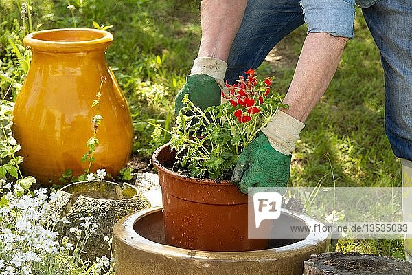 Symbol picture gardening  woman planting plants into pots  France  Europe