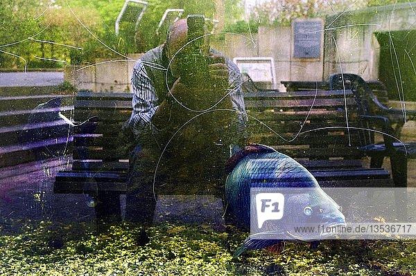 Fotograf spiegelt sich in der Scheibe eines Aquariums