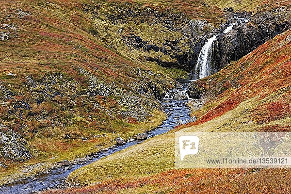 Small waterfall in autumn landscape  West Iceland  Iceland  Europe