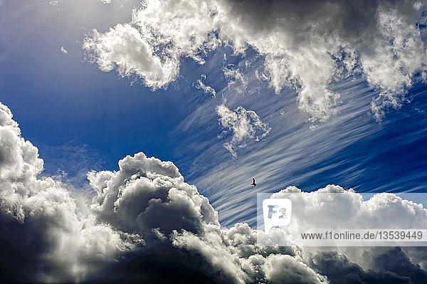 Eine einzelne Möwe fliegt durch eine Lücke in den Wolken