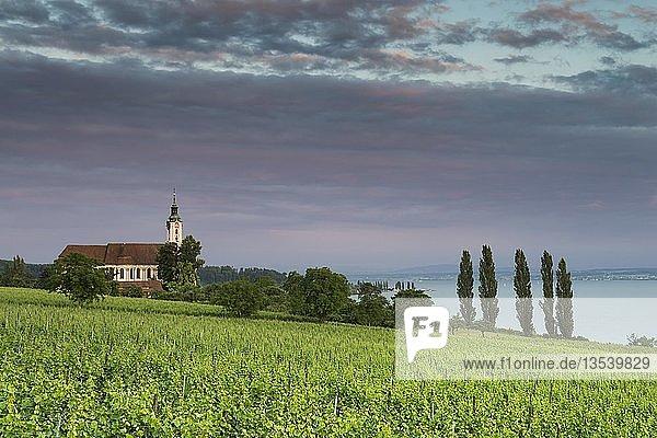 Die barocke Wallfahrtskirche Birnau am Bodenseeufer im Abendlicht  davor Weinreben  Bodenseekreis  Baden-Württemberg  Deutschland  Europa