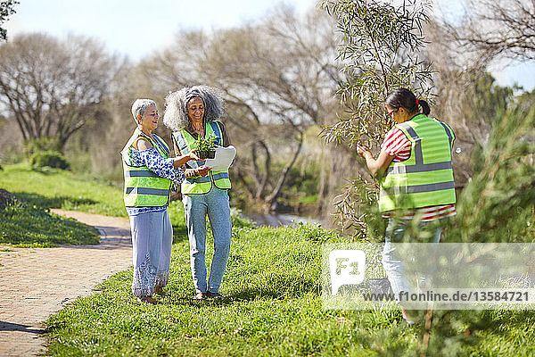 Female volunteers planting tree and plants in sunny park