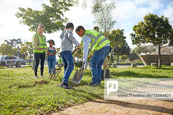 Volunteers planting trees in sunny park