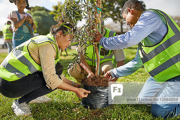 Volunteers planting tree in park