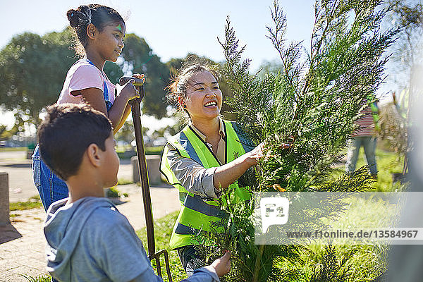 Mother and children volunteers planting tree in sunny park
