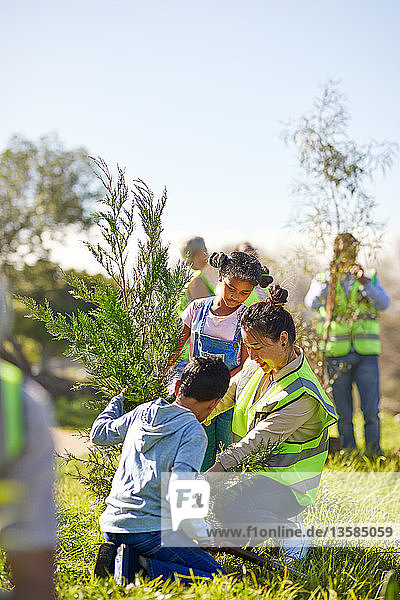 Family volunteers planting tree in sunny park