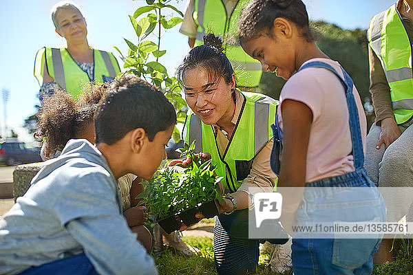 Woman and children volunteers planting herbs in sunny park