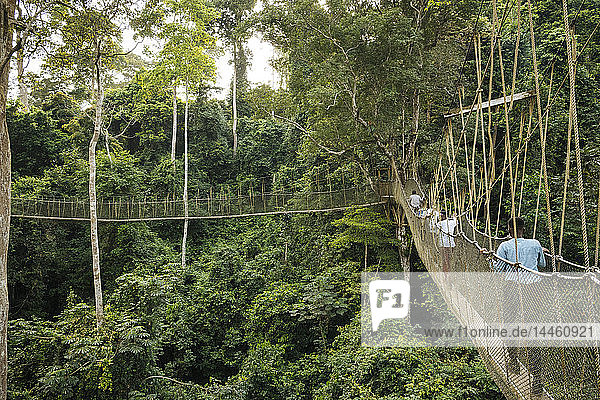 Canopy Walkway through tropical rainforest in Kakum National Park  Ghana