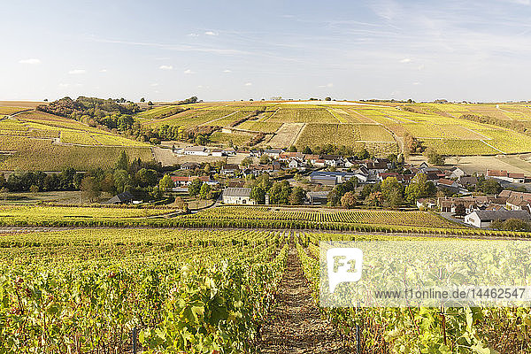 The vineyards of Sancerre  known for fine wines from grape varieties such as pinot noir and sauvignon blanc  Sancerre  Cher  Centre-Val de Loire  France