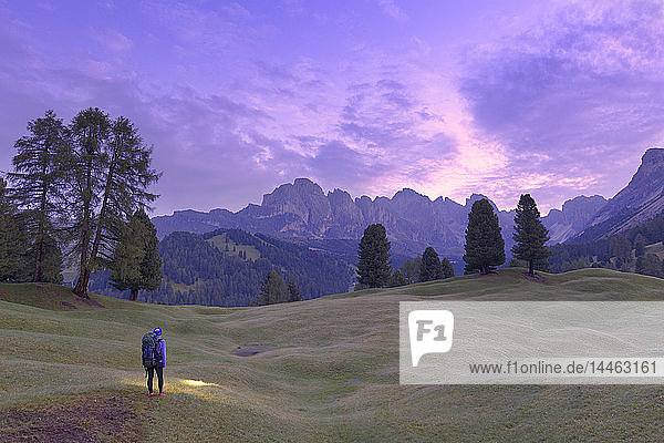 Hiker looks at pink light of dusk with Odle group in the background  Selva  Gardena Valley  South Tyrol  Dolomites  Italy