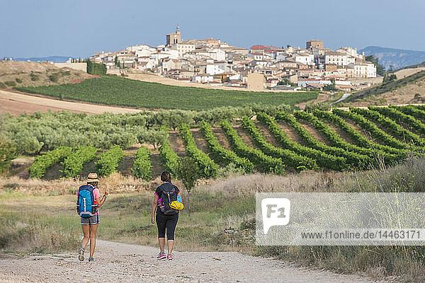 Pilgrims walking the Camino de Santiago (The Way of St. James) towards little village of Cirauqui  Navarre  Spain