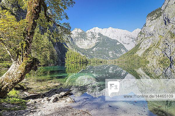 Watzmann Mountain reflecting in Lake Obersee  near lake Koenigssee  Berchtesgadener Land  Berchtesgaden National Park  Upper Bavaria  Bavaria  Germany  Europe