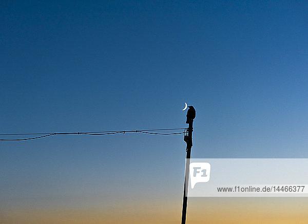 Vogelsilhouette neben Halbmond
